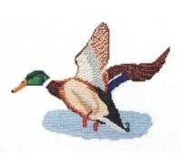 Mallard in Flight Cross Stitch